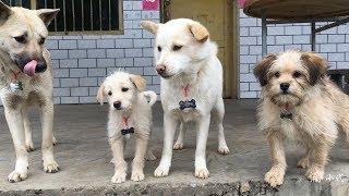 农村最时尚的狗狗,竟然都戴上了狗牌,一个比一个好看