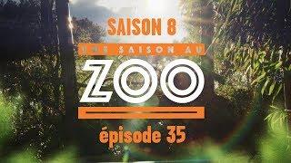 Une Saison au Zoo S8 - Ep 35