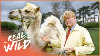 Life On A Camel Farm | Ronnies Animal Crackers | Real Wild