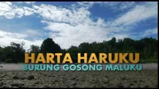 Jejak Rimba Harta Haruku Burung Gosong Maluku