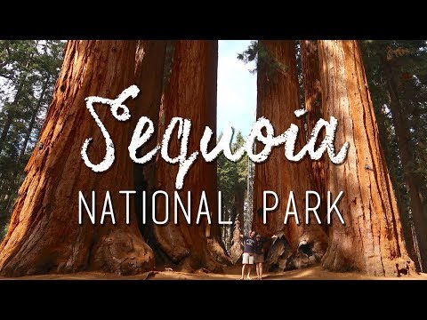 Sequoia National Park - Biggest trees in the world