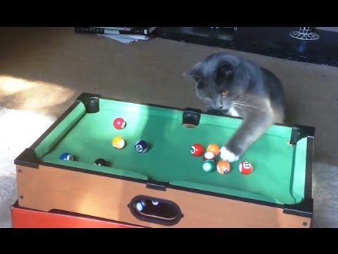 Cats Playing Pool Compilation