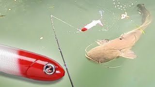 SIGHT FISHING for BIG CATFISH SILURE au WHOPPER PLOPPER