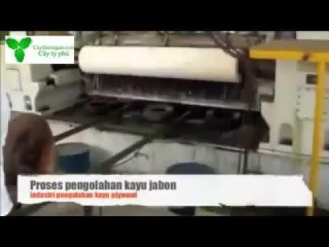 Trồng, khai thác và chế biến gỗ cây thiên ngân ở Indonesia
