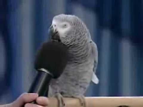 Einstein the BEST Trained Parrot Alive!!!!!!!!!!!!!!