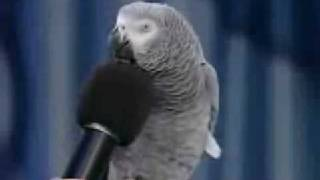 Einstein The Best Trained Parrot Alive!!!!!!!!!!!!!!