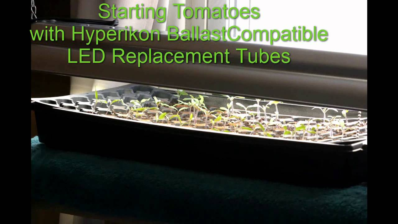 Can you use LED lights to start Vegetables?