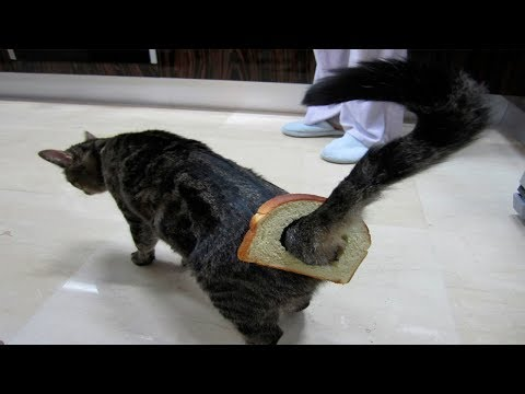 Animal Fails January 2018 - Animal Fails Compilation 2018