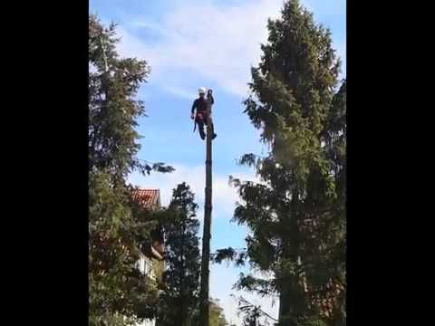 Świerk - Wycinka metodą alpinistyczną - Drwal Gdańsk