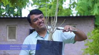 Bonsai Man Hiren Patel Is Working On Stock bonsai & Maskman Bonsai