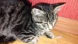 Пока муж лежит в больнице с ковидом, я подобрала ещё одного бездомного котенка