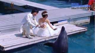 かわいいイルカと一緒にウエディングフォト撮影! イルカと戯れながらの...