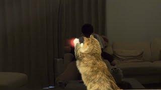 ちゃちゃマロと一緒に遊べる動画。