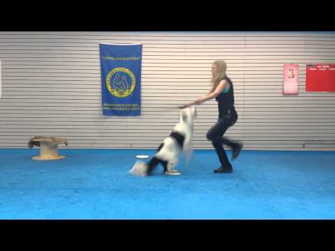 Hero the Super Collie jumps rope
