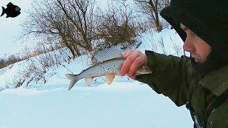 елец и хариус под Новый год \ рыбалка на малой речке