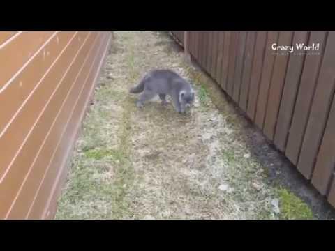 Говорящие коты на youtube