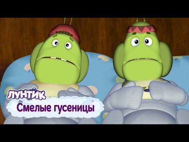 Смелые гусеницы 🐛 Лунтик 💪 Сборник мультфильмов 2019