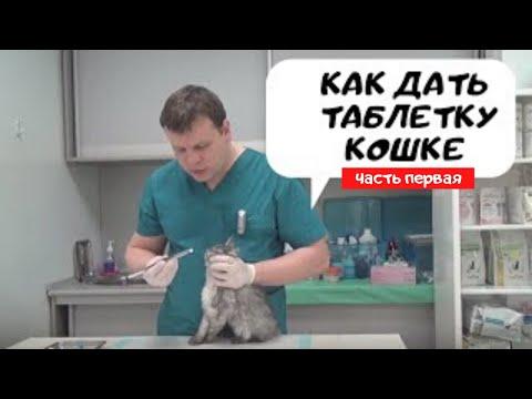 Как дать коту активированный уголь