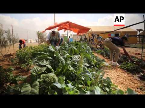 Syrian refugees turn Jordan's water-starved desert green