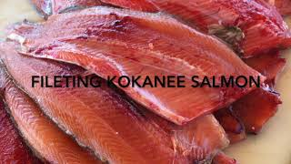 How to Filet Kokanee Salmon caught at Flaming Gorge Reservoir
