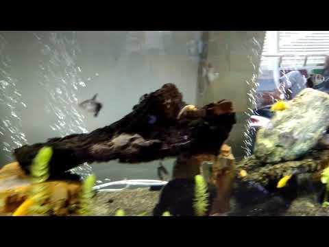 Aquarium at Juanda International Airport, Surabaya, Indonesia