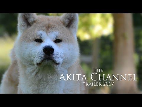 The Akita Channel Trailer