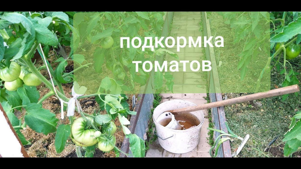 Томаты очень  любят эту органическую подкормку - пора подкормить/Снижаю жару в теплице