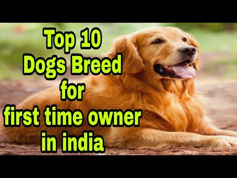 Top 10 Dogs breed for first time owner in india