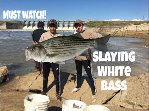 White Bassin At Livingston Dam !