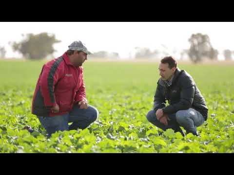 Roundup Ready canola a rotational keeper in the West Wimmera