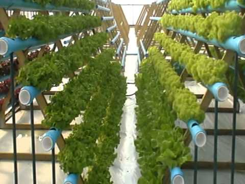 Hydroponic Lettuce Experiment Vertical Growing Youtube