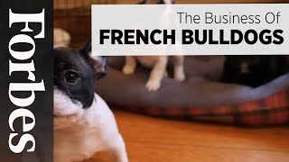 The Business Of French Bulldogs