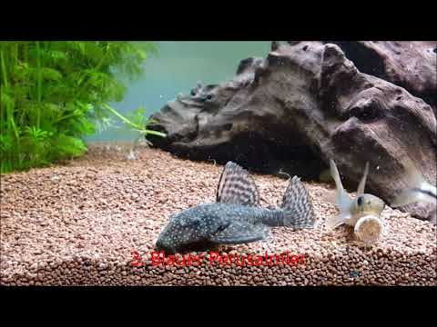 10 Fische für Neueinsteiger (mit Haltungsbedingungen der Fische)