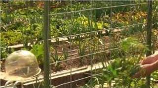 Growing Tomatoes : How To Make A Tomato Trellis