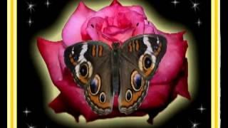 С ДОБРЫМ УТРОМ(Хорошего воскресного утра и хорошего дня!, 2013-10-27T07:28:15.000Z)