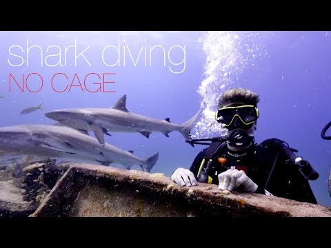 Shark Diving with No Cage in the Bahamas.