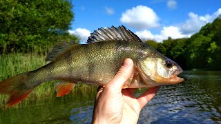 Рыбалка на лесном озере в мае