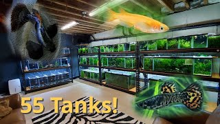 1st Fish Room Tour: 55 Tanks! Rice Fish, Guppies, Angelfish and More
