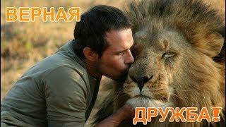 Верная дружба между диким животным и человеком! 3 удивительные истории!