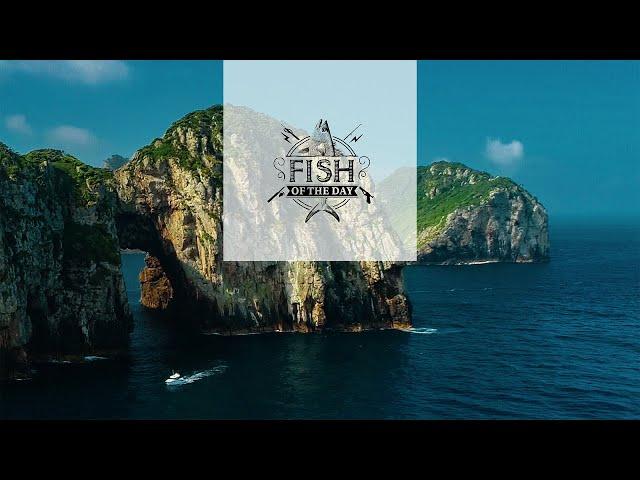 Fish of the Day I Saison 4. Épisode 1 - Un lieu qui regorge de secrets