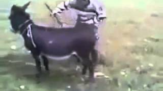vuclip Donkey Starts and Run..Hilarious Video