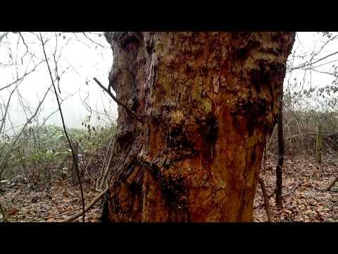 Mobistel Cynus T2 Kamera Testvideo