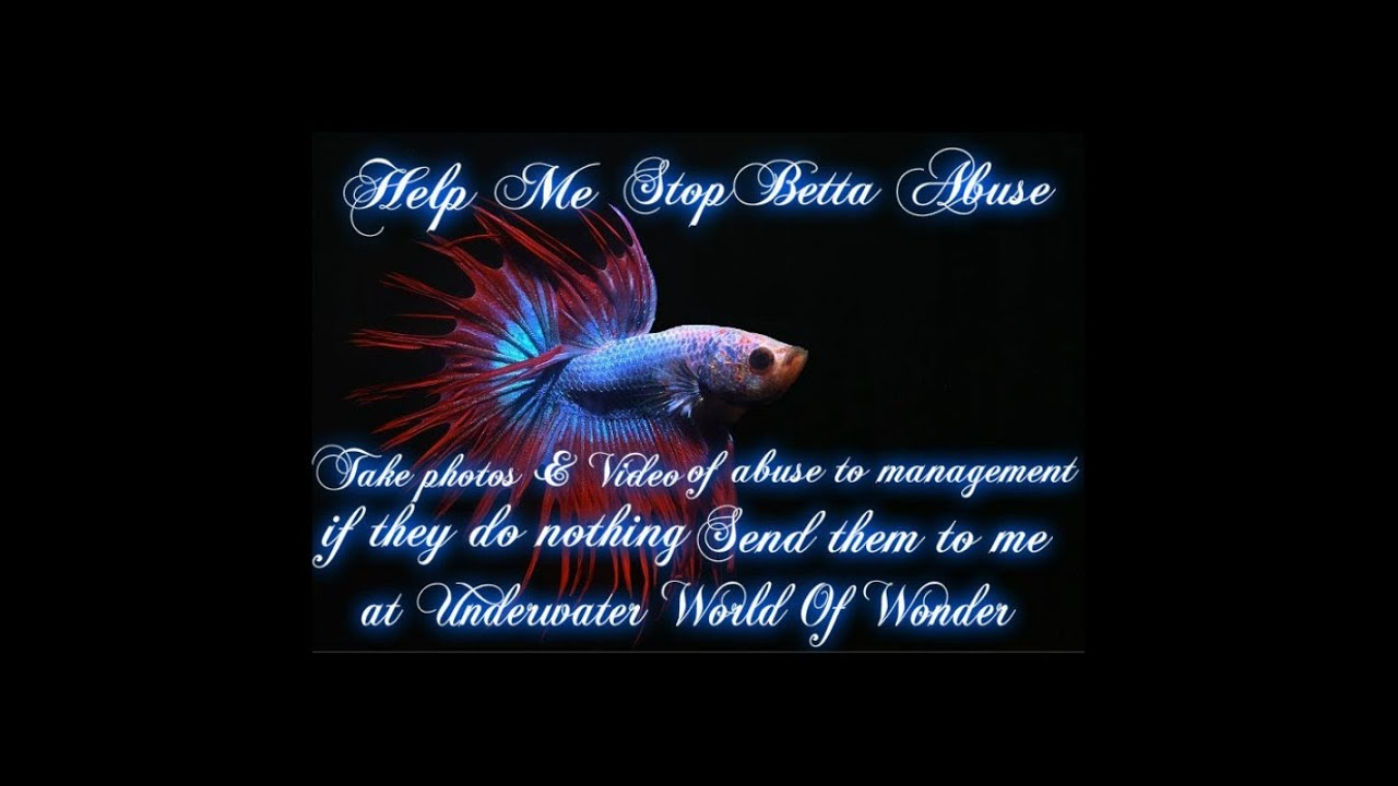 Betta abuse at walmart youtube for How much are betta fish at walmart