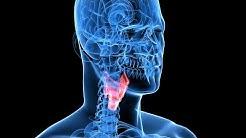 Schilddrüsenerkrankungen erkennen und behandeln