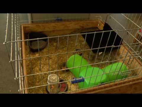 Konijnenwelzijn in de spotlights bij Dordtse dierenwinkels