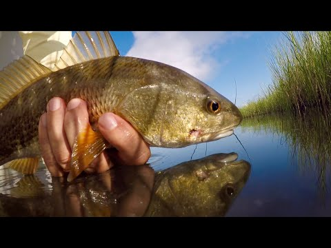 Redfish slam using only local lures!