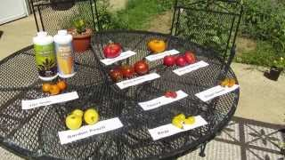 How to Grow Heirloom Tomatoes by The Lettuce People