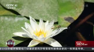 [今日环球]新疆博斯腾湖8万亩野生睡莲开放| CCTV中文国际