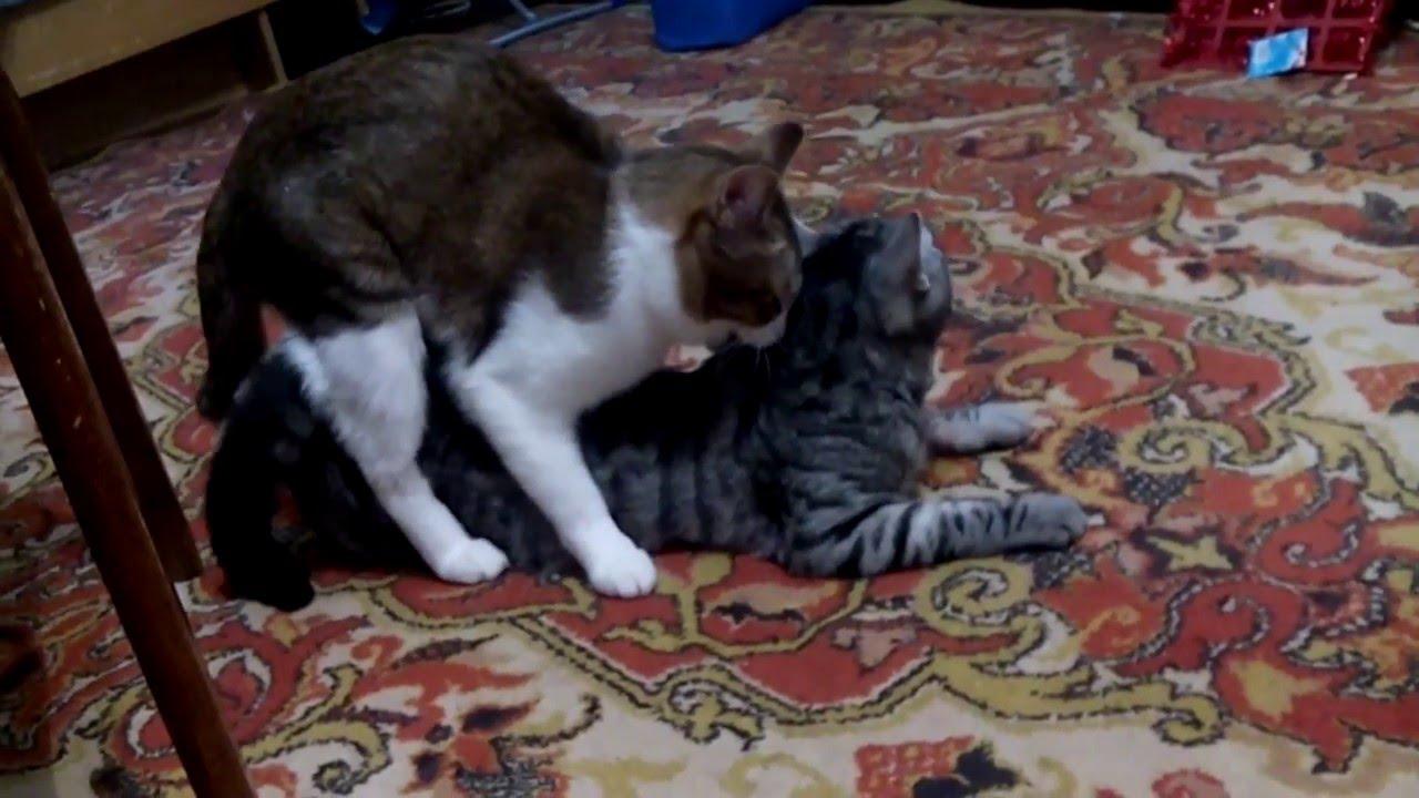 Кот +и кошка - YouTube