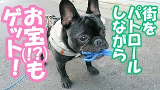 愛犬の面白いクセ お散歩中に物を拾ってそのまま歩く 第3弾